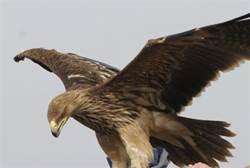 Hezbollah TV: 'Israeli Spy Eagle' Caught in Lebanon