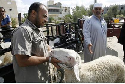 PA Negligence and Sheep Smuggling Cause Brucellosis Outbreak